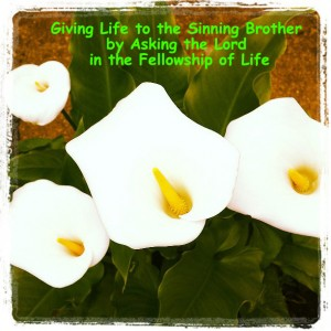 Giving Life to the Sinning Brother by Asking the Lord in the Fellowship of Life
