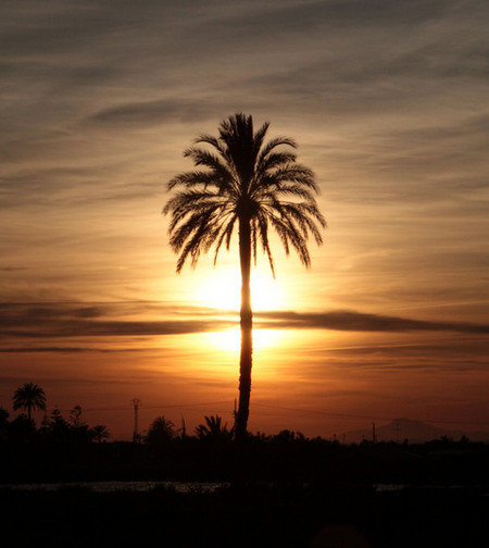 Likened to a Palm Tree - Having the Fullness of the Stature of Christ