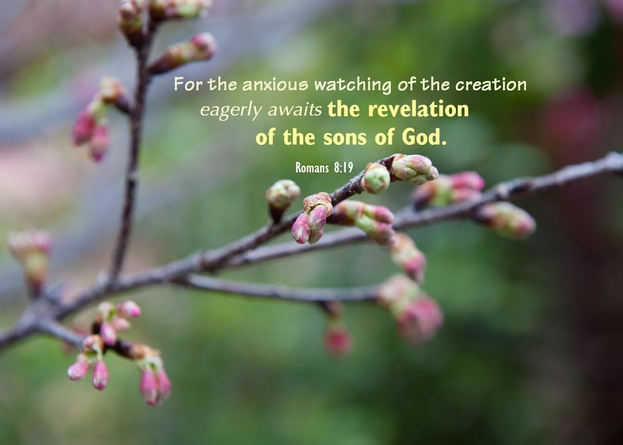 Romans 8:19 For the anxious watching of the creation eagerly awaits the revelation of the sons of God.