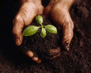 sowing the seeds of life, planting Christ into people, and watering others with living water