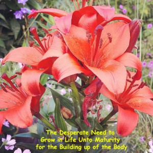 The Desperate Need to Grow in Life Unto Maturity for the Building up of the Body