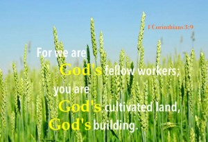 Letting the Lord to Saturate our Soul to Transform us for the Building up of the Body