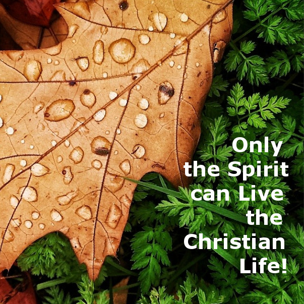 to live a christian life among strangers Aliens and strangers describe the christian in his position in this world because he has died to this world,  christians have always had to live among the pagans,  holding your manner of life among the unsaved steadily beautiful in its goodness,.