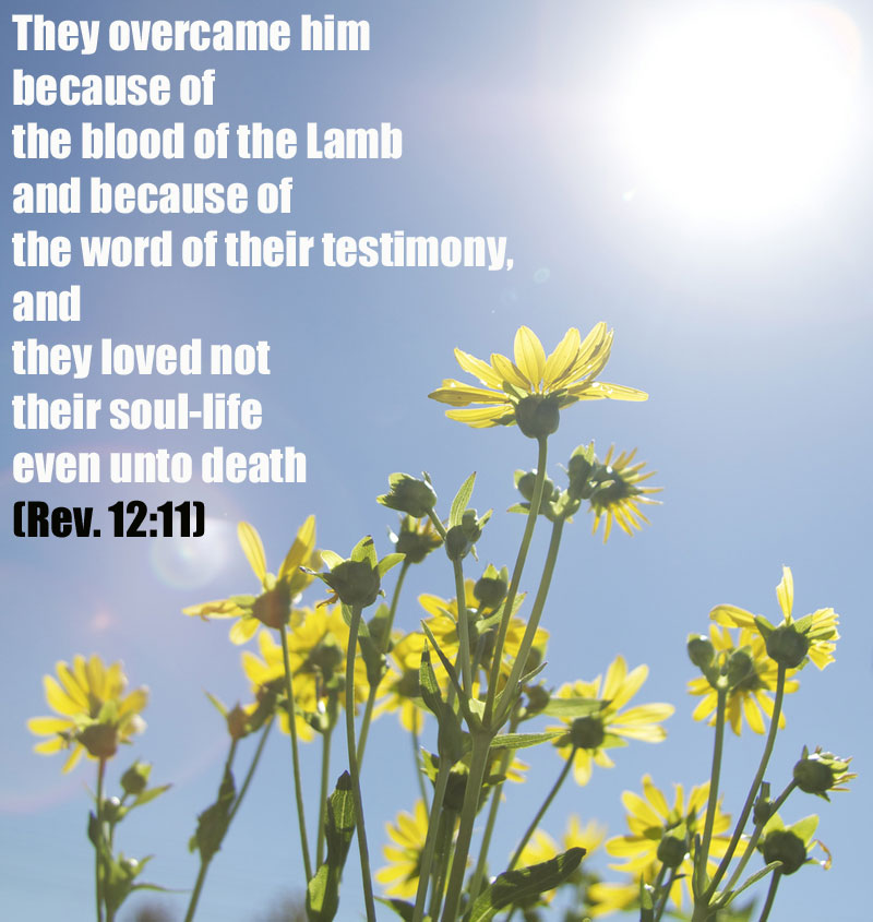 The Testimony Of Jesus Is The Great Multitude And The