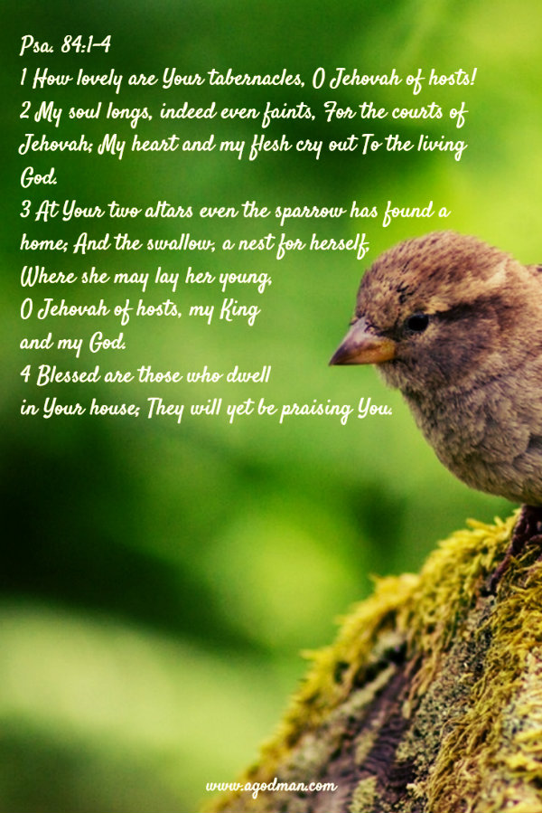 Psa. 84:1-4 How lovely are Your tabernacles, O Jehovah of hosts! My soul longs, indeed even faints, For the courts of Jehovah; My heart and my flesh cry out To the living God. At Your two altars even the sparrow has found a home; And the swallow, a nest for herself, Where she may lay her young, O Jehovah of hosts, my King and my God. Blessed are those who dwell in Your house; They will yet be praising You.