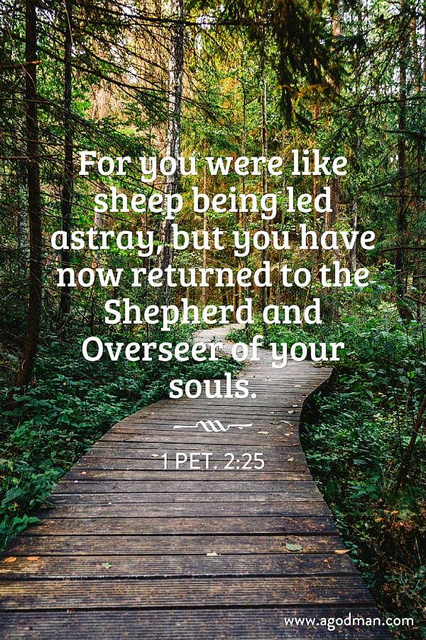 1 Pet. 2:25 For you were like sheep being led astray, but you have now returned to the Shepherd and Overseer of your souls.
