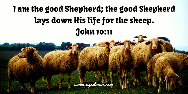 John 10:11 I am the good Shepherd; the good Shepherd lays down His life for the sheep.