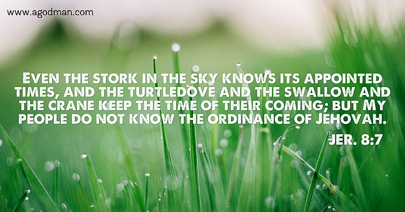 Jer. 8:7 Even the stork in the sky knows its appointed times, and the turtledove and the swallow and the crane keep the time of their coming; but My people do not know the ordinance of Jehovah.