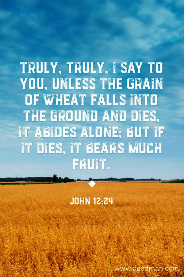 John 12:24 Truly, truly, I say to you, Unless the grain of wheat falls into the ground and dies, it abides alone; but if it dies, it bears much fruit.