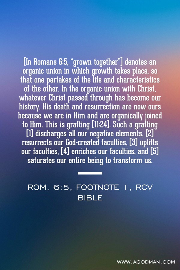 """[In Romans 6:5, """"grown together""""] denotes an organic union in which growth takes place, so that one partakes of the life and characteristics of the other. In the organic union with Christ, whatever Christ passed through has become our history. His death and resurrection are now ours because we are in Him and are organically joined to Him. This is grafting (11:24). Such a grafting (1) discharges all our negative elements, (2) resurrects our God-created faculties, (3) uplifts our faculties, (4) enriches our faculties, and (5) saturates our entire being to transform us. Rom. 6:5, footnote 1, RcV Bible"""